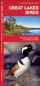 Great Lakes Birds: A Folding Pocket Guide to Familiar Species (Pocket Naturalist Guide Series)