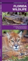 Florida Wildlife: A Folding Guide to Familiar Animals (Pocket Naturalist Guide Series)