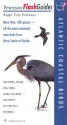 Atlantic Coastal Birds (Peterson FlashGuides)