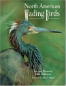 North American Wading Birds (Wildlife)