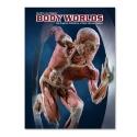 Body Worlds - The original exhibition o...