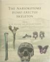 Nariokotome Homo Erectus Skeleton