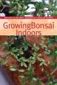 Growing Bonsai Indoors (Brooklyn Botanic Garden All-Region Guide)